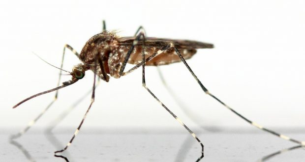 how to prevent fly bites